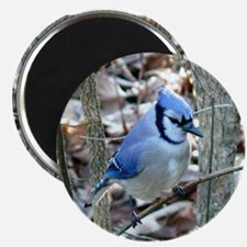 "Beautiful BlueJay 2.25"" Magnet (10 pack)"