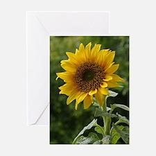 Face the Sun Greeting Card
