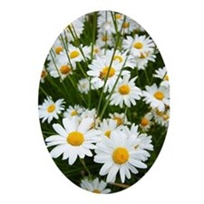 fields daisies 2012 085 Ornament (Oval)