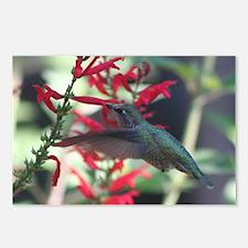 hummimg bird.jpg Postcards (Package of 8)