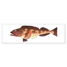 Lingcod fish Bumper Bumper Sticker