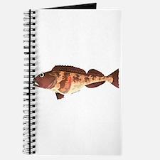 Lingcod fish Journal