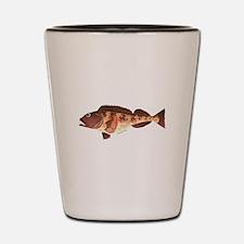 Lingcod fish Shot Glass