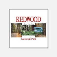 "Redwood Americasbesthistory Square Sticker 3"" x 3"""