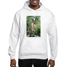 Dinosaurs T-Rex Hoodie Sweatshirt