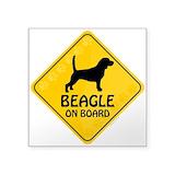 Beagle Square