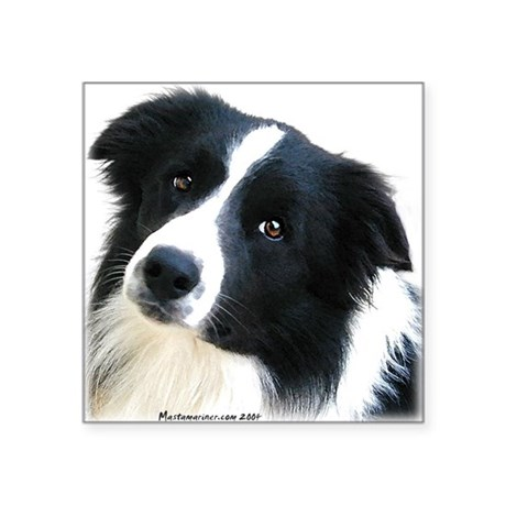 Border Collie Portrait Water Colour Sticker
