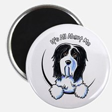 "Bearded Collie IAAM 2.25"" Magnet (10 pack)"
