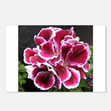 GERANIUM FLOWER~Regal Picotee~ Postcards (Package