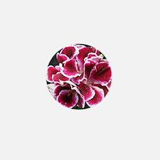GERANIUM FLOWER~Regal Picotee~ Mini Button