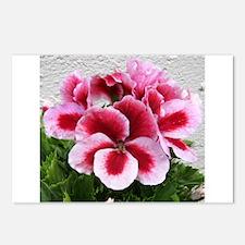 GERANIUM FLOWER~Regal Pinwheel~ Postcards (Package