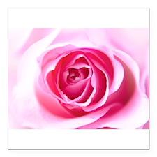 "Pink Rose Square Car Magnet 3"" x 3"""