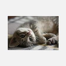 Lying kitten - Rectangle Magnet