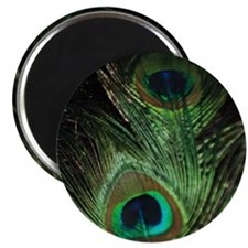 Loma Peacock Magnet
