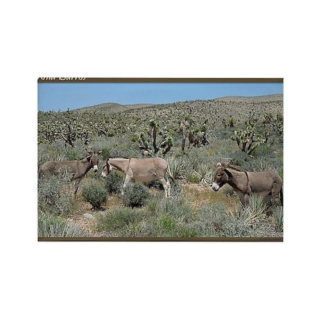 Wild Burros #324 Rectangle Magnet