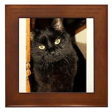 Black Cat named Cosmo Framed Tile