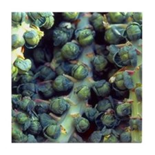 Tile Coaster Brussel Sprouts