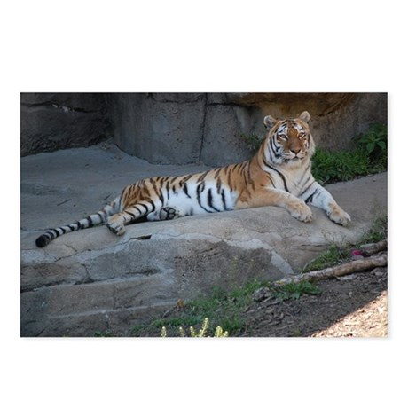 Tiger Love Postcards (Package of 8)