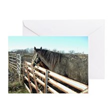 Just Horses Greeting Card
