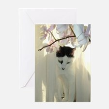 Black and White Shorthaired Cat Greeting Card