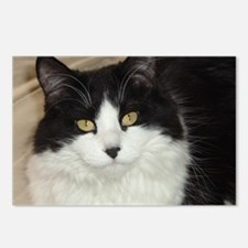 Black and White Longhaired Cat Postcards (Package