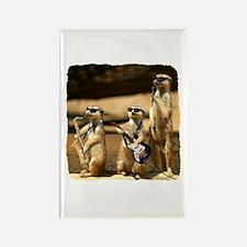 Meerkat Trio Rectangle Magnet (10 pack)
