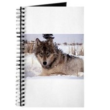 Wolf in Yellowstone Journal