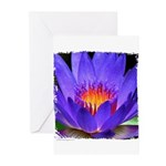 Purple Lily Greeting Cards (Pk of 10)