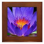 Purple Lily Framed Tile