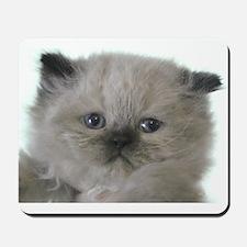 fabulous himalayan kitten Mousepad