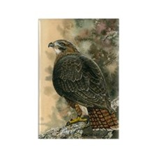 Red Tailed Hawk Rectangle Magnet