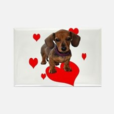 Love Dachshunds Rectangle Magnet