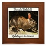 Brush Rabbit Framed Tile