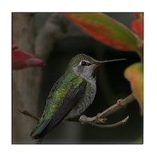 Tile Coaster - Hummingbird