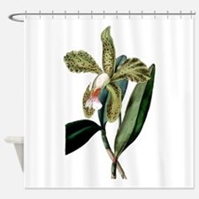 Cattleya Granulosa Shower Curtain