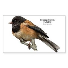 Dark-Eyed Junco Decal