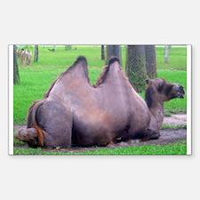 camel 3 Rectangle Decal