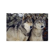 Wolf Couple Rectangle Magnet