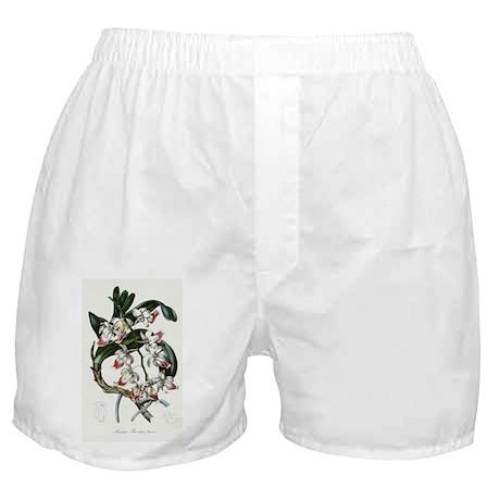 Aerides Brookii Boxer Shorts