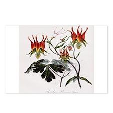 Aquilegia Skinneria Postcards (Package of 8)