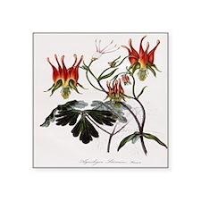 Aquilegia Skinneria Sticker