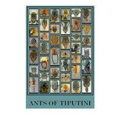 Ants of Tiputini Postcards (Package of 8)