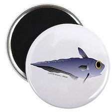 """Grenadier Deep Sea fish (Annas Antarctica) 2.25"""" M"""