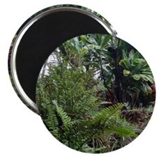"""Tropical Jungle 3 2.25"""" Magnet (10 pack)"""
