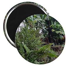 Tropical Jungle 3 Magnet