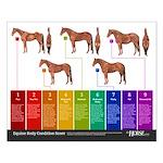 Horse Body Condition Score 16x20 Poster