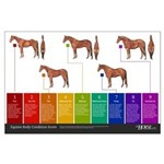 Horse Body Condition Score Large Poster