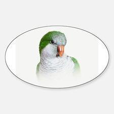 Green Quaker Parrot Decal