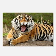 Sumatran roaring tiger Postcards (Package of 8)