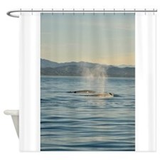Two Gray Whale Shower Curtain